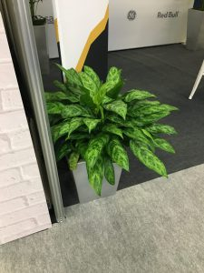 Plant at Ecommerce Expo